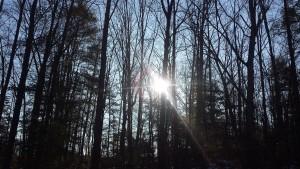snow-2015-woods